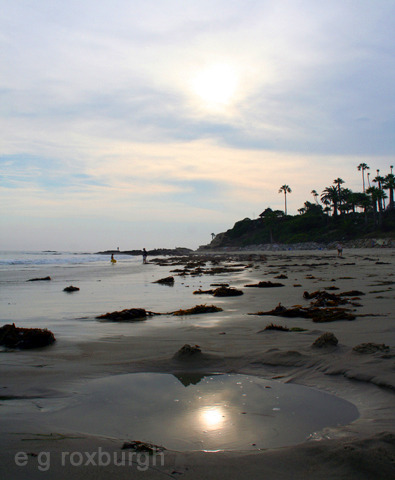 shoreline in summer
