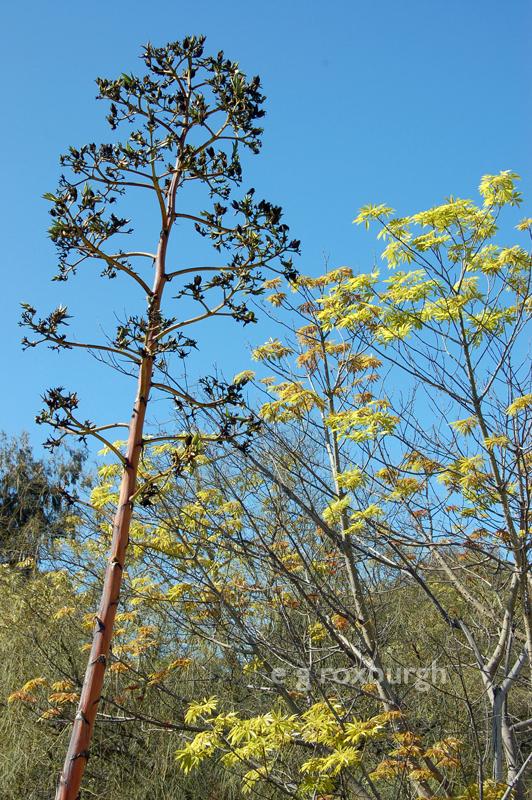 tree line in a Desert Garden