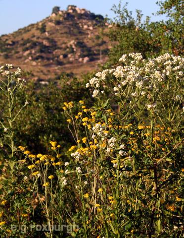 Flower Tuesday! a floral landscape