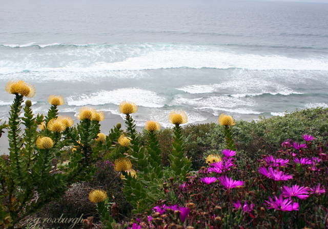 Flower Tuesday! seascape w Holiday flowers