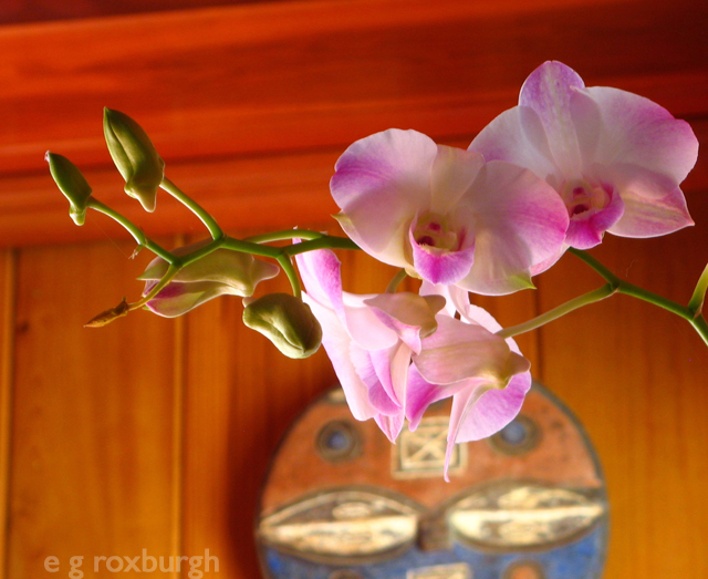 Flower Tuesday! Dendrobium w mask
