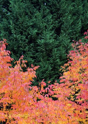 Autumn color w leaves