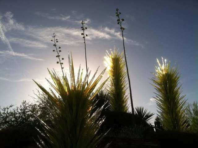 Chihuly @ Botanical Gardens AZ