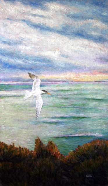 e Sea Bird 15 a