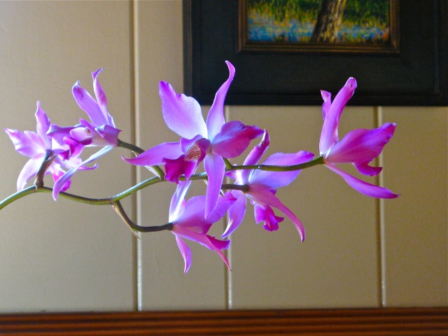 orchid-w-light